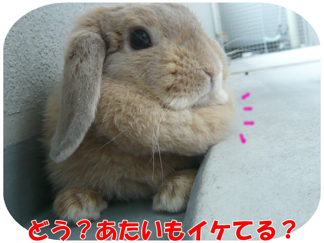 c0151439_15462577.jpg