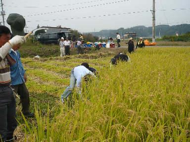 稲刈りに行ってきました。(茨城 木内酒造)_f0193752_2441219.jpg