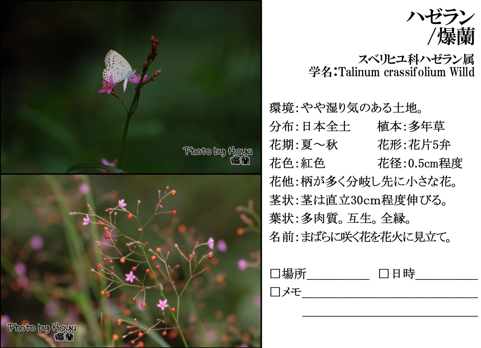 a0059328_744394.jpg