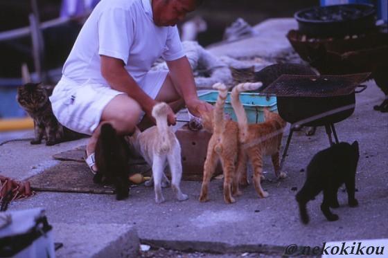島猫たちの、わくわくタイム♪_b0138848_22432184.jpg