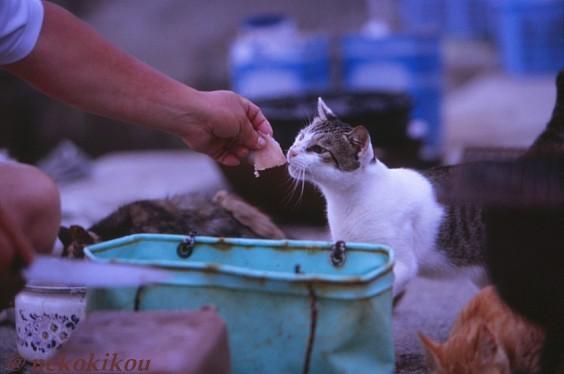 島猫たちの、わくわくタイム♪_b0138848_22435689.jpg