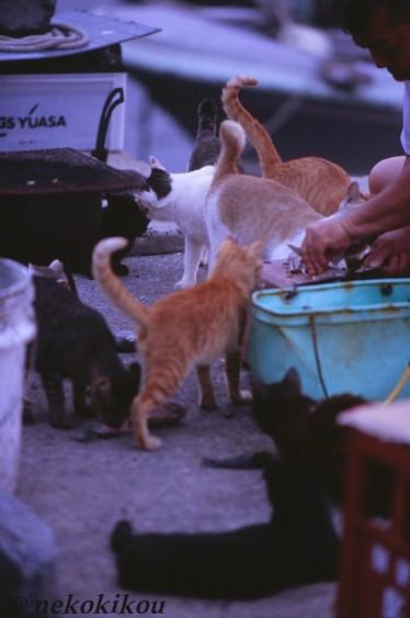 島猫たちの、わくわくタイム♪_b0138848_224410100.jpg
