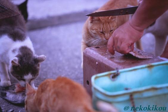 島猫たちの、わくわくタイム♪_b0138848_22444294.jpg