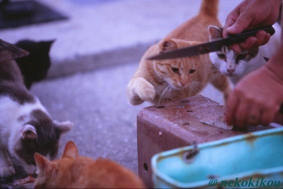 島猫たちの、わくわくタイム♪_b0138848_22445973.jpg