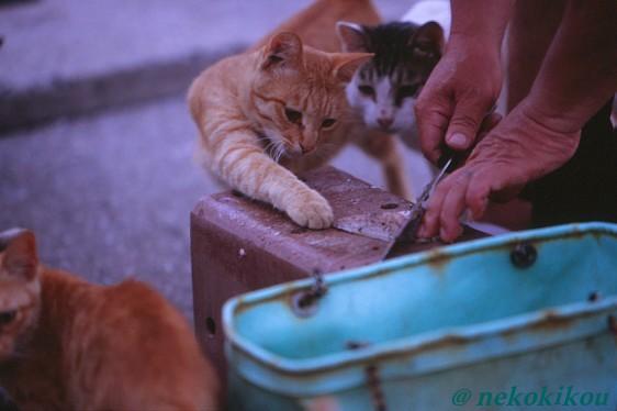 島猫たちの、わくわくタイム♪_b0138848_22451736.jpg