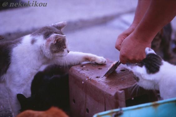 島猫たちの、わくわくタイム♪_b0138848_22453524.jpg