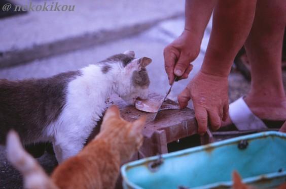 島猫たちの、わくわくタイム♪_b0138848_22455225.jpg