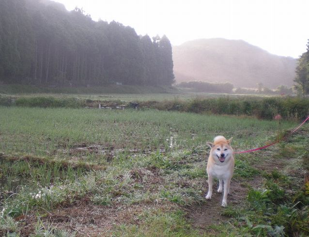 2008年10月7日(水)犬猫版トム&ジェリー!_f0060461_2016329.jpg