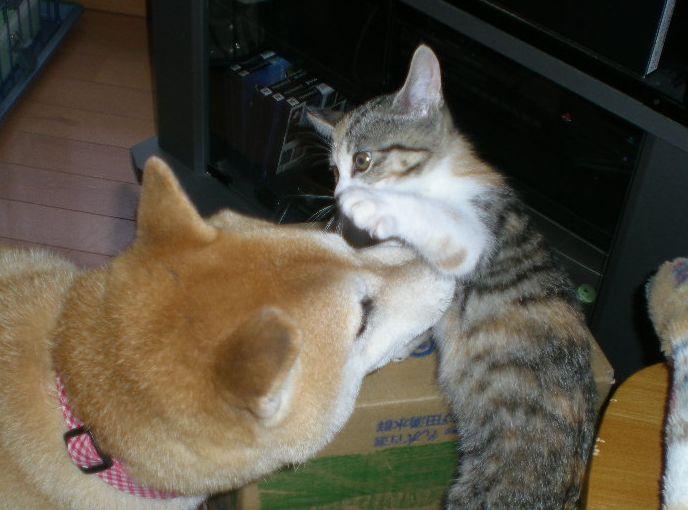 2008年10月7日(水)犬猫版トム&ジェリー!_f0060461_20231695.jpg