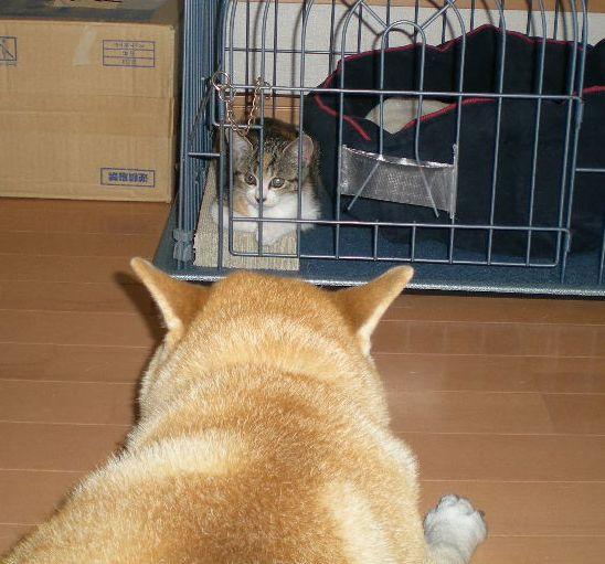 2008年10月7日(水)犬猫版トム&ジェリー!_f0060461_2029754.jpg