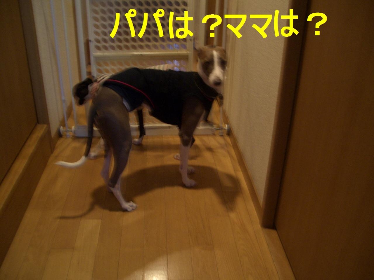 b0141163_9323011.jpg