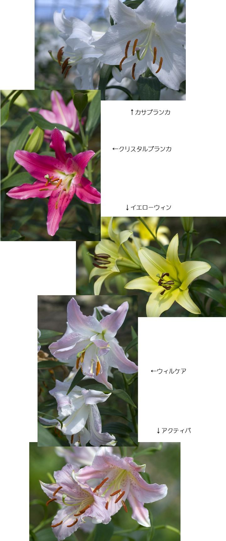 f0093285_1623787.jpg