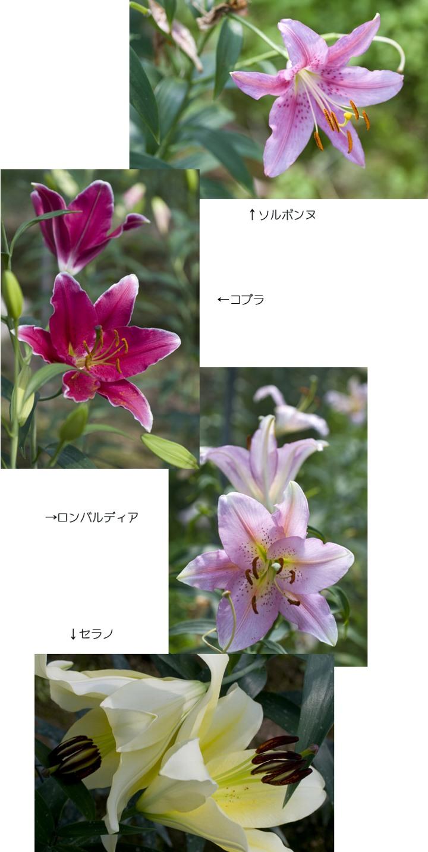 f0093285_1625781.jpg