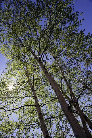 木の日_c0125004_22373234.jpg