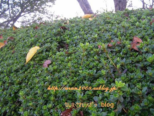 秋の朝_d0147812_21383177.jpg