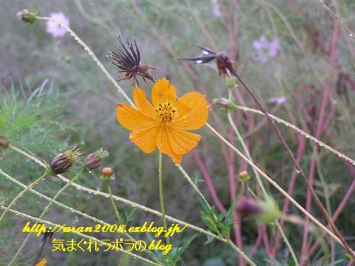 秋の朝_d0147812_2138545.jpg
