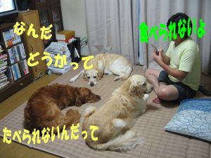 b0008217_10583488.jpg
