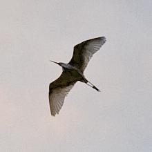 bird_e0117517_1333136.jpg