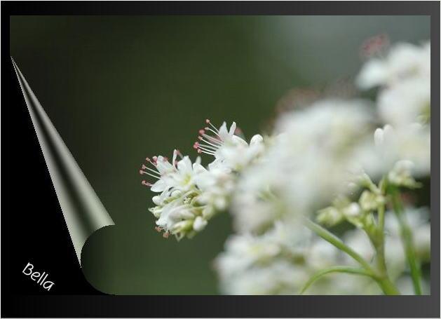 小石川植物園 2008年10月_f0012718_9552358.jpg