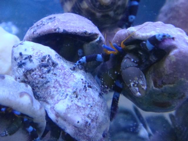 海水魚・サンゴ_f0189122_13573457.jpg