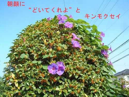 b0008825_21332851.jpg