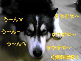 f0148927_10265064.jpg