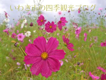 f0105342_1641326.jpg