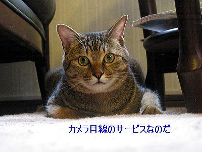 b0097848_13543498.jpg