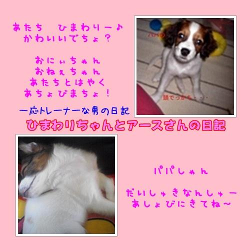c0075585_2011667.jpg