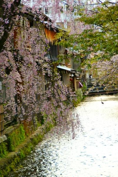 京都小旅行 ~祇園あたり~_f0189086_20223424.jpg