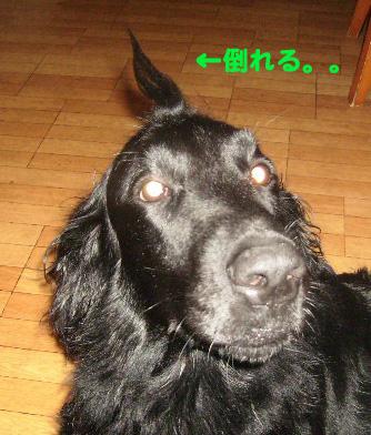 伸び伸びぃーピヨ毛_b0084194_13265178.jpg