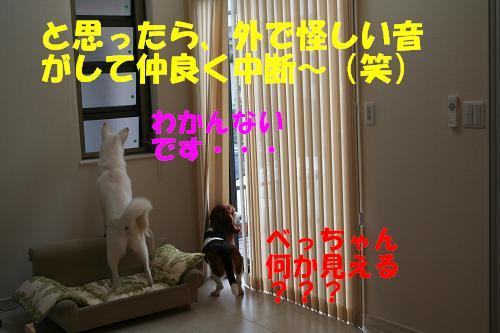 f0121712_1442435.jpg
