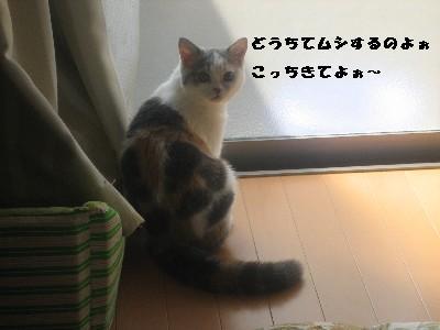f0191716_14505698.jpg