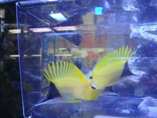 海水魚_f0189122_1162399.jpg