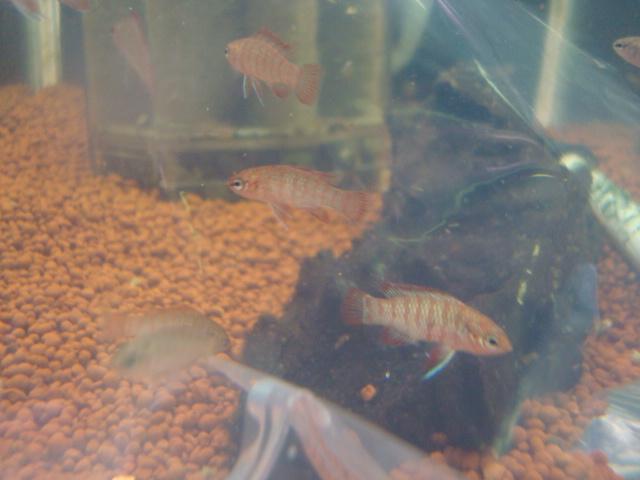 熱帯魚・金魚・水草_f0189122_15104883.jpg