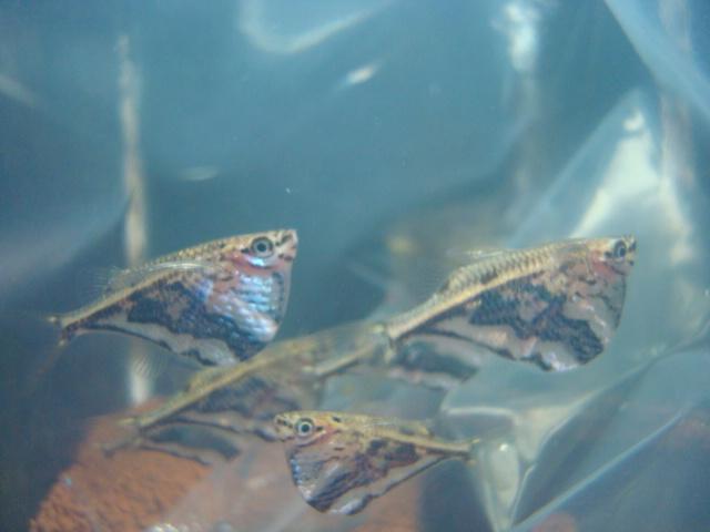熱帯魚・金魚・水草_f0189122_156692.jpg