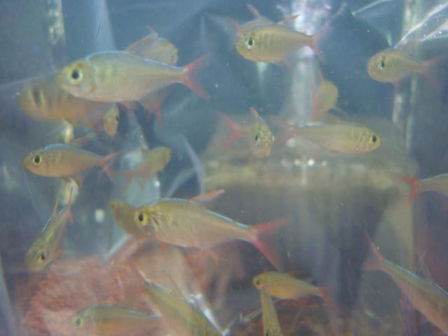 熱帯魚・金魚・水草_f0189122_157265.jpg