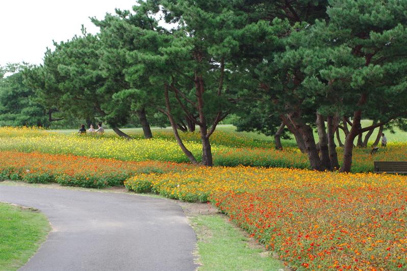 第55回全日本プロ選手権自転車競技大会BMX競技INひたち:最終回コース外の風景_b0065730_23591172.jpg