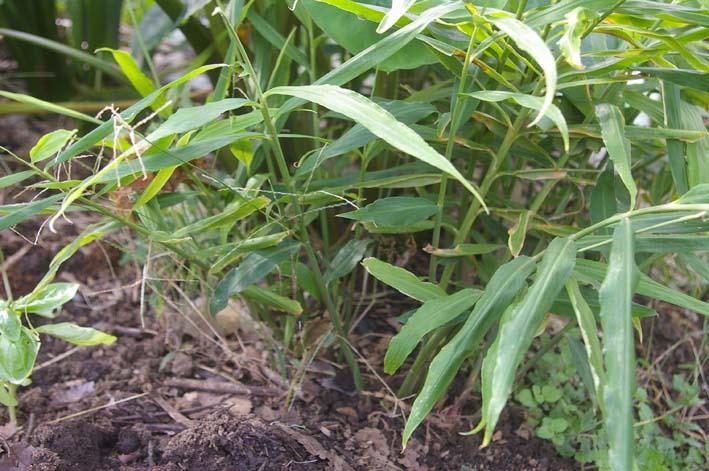 ダイコンの葉の緑に心癒される!(2008・10・9)_c0014967_1853790.jpg