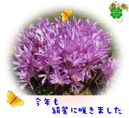 b0149071_16585351.jpg