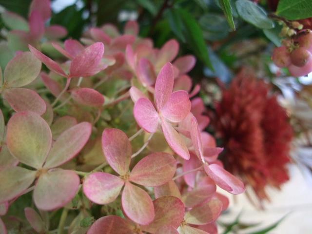オークリーフ花の教室(阿部さんの作品)_f0049672_17542591.jpg