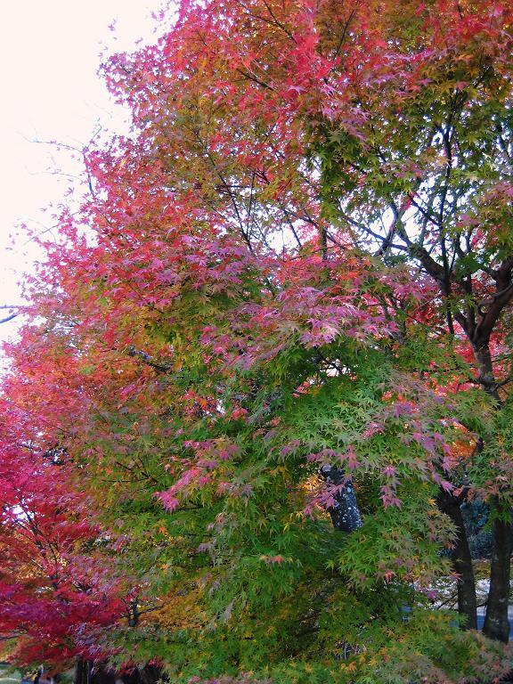 秋の有田陶磁器まつり_f0040201_2248475.jpg