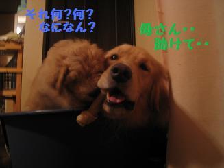 10月7日 ポッキー優しすぎるよぉ・・_e0136815_220232.jpg