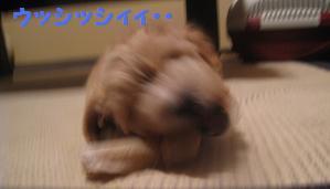 10月7日 ポッキー優しすぎるよぉ・・_e0136815_2223123.jpg