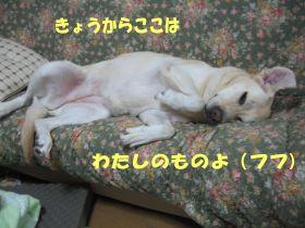 b0008217_0415888.jpg