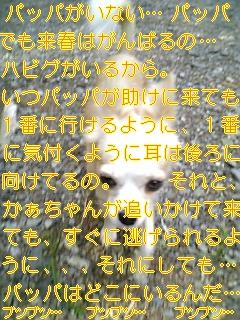 慣れなさい_f0148927_1813097.jpg