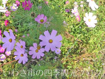 f0105342_1885281.jpg