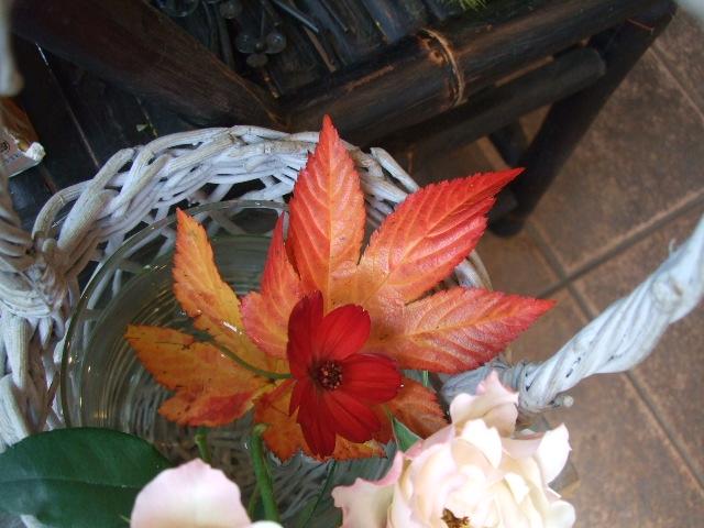 オークリーフ(紅葉実物狩りにいらっしゃいませんか?)_f0049672_1534669.jpg