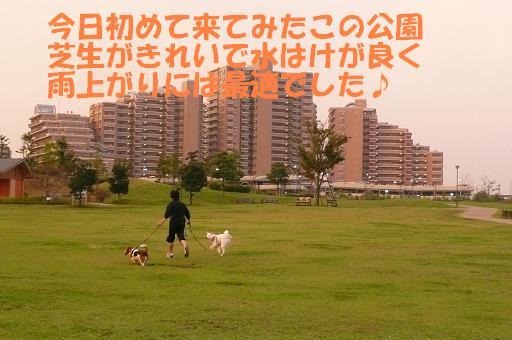 f0121712_1463091.jpg