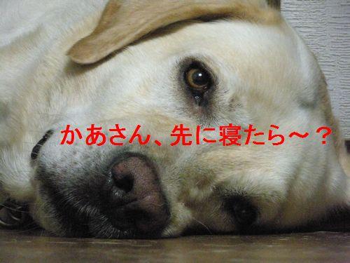 f0183814_0431061.jpg